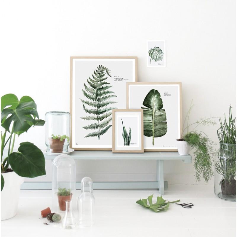 affiche-urban-botanic-musa