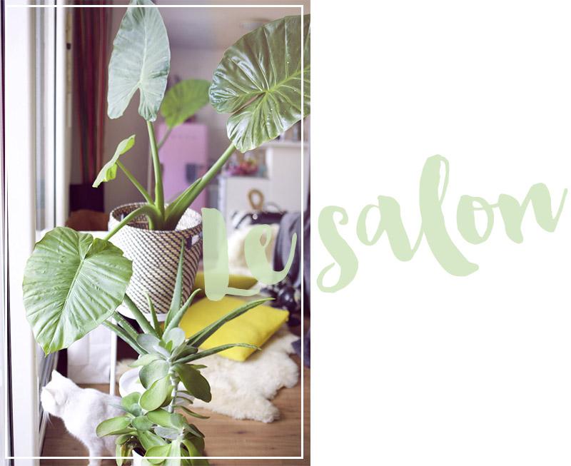 décoration salon plantes